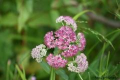цветы 151
