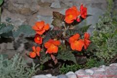 цветы 161
