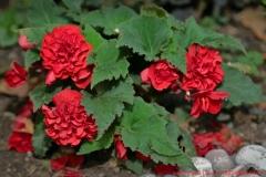 цветы 162