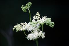 цветы 18