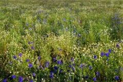 цветы 19