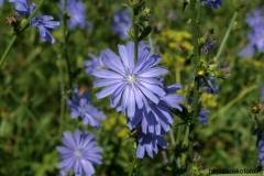 цветы 22
