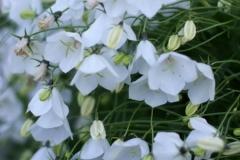 цветы 25