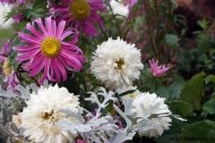 цветы 31