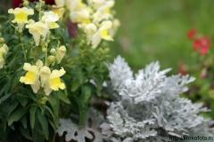цветы 38
