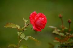 цветы 40