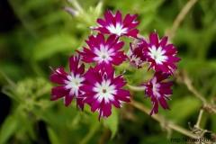 цветы 42