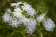 цветы 44