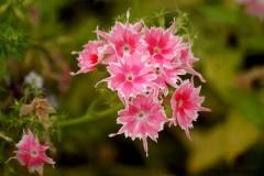 цветы 45