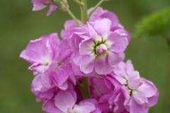 цветы 57