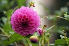 цветы 53