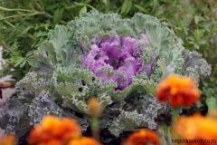 цветы 55