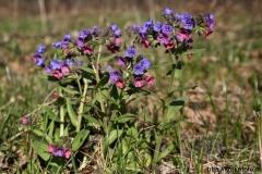 цветы 158