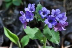 цветы 159