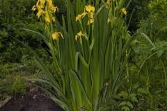 цветы 58
