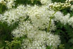 цветы 60