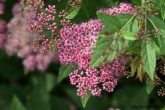 цветы 153