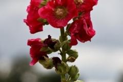 цветы 156