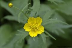 цветы 67