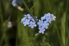 цветы 71