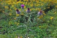 цветы 173