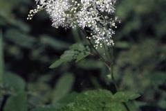 цветы 168