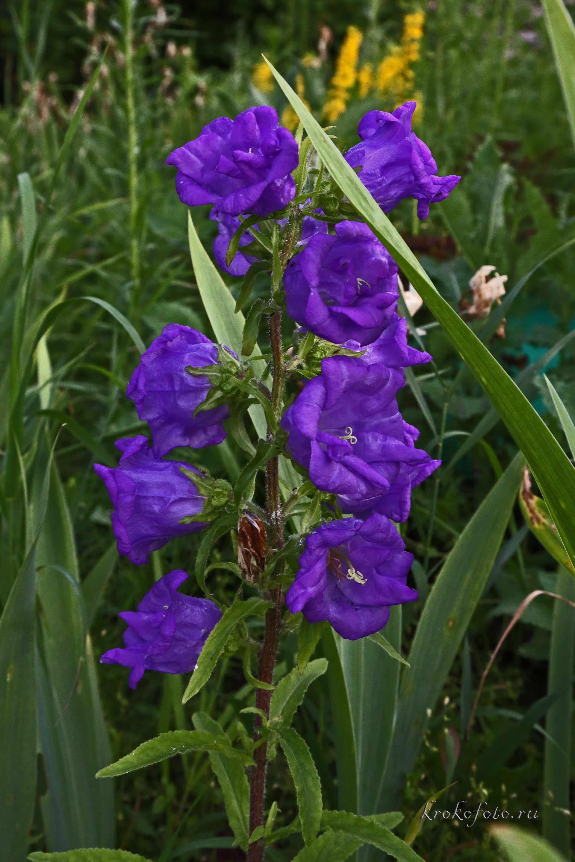цветы 170