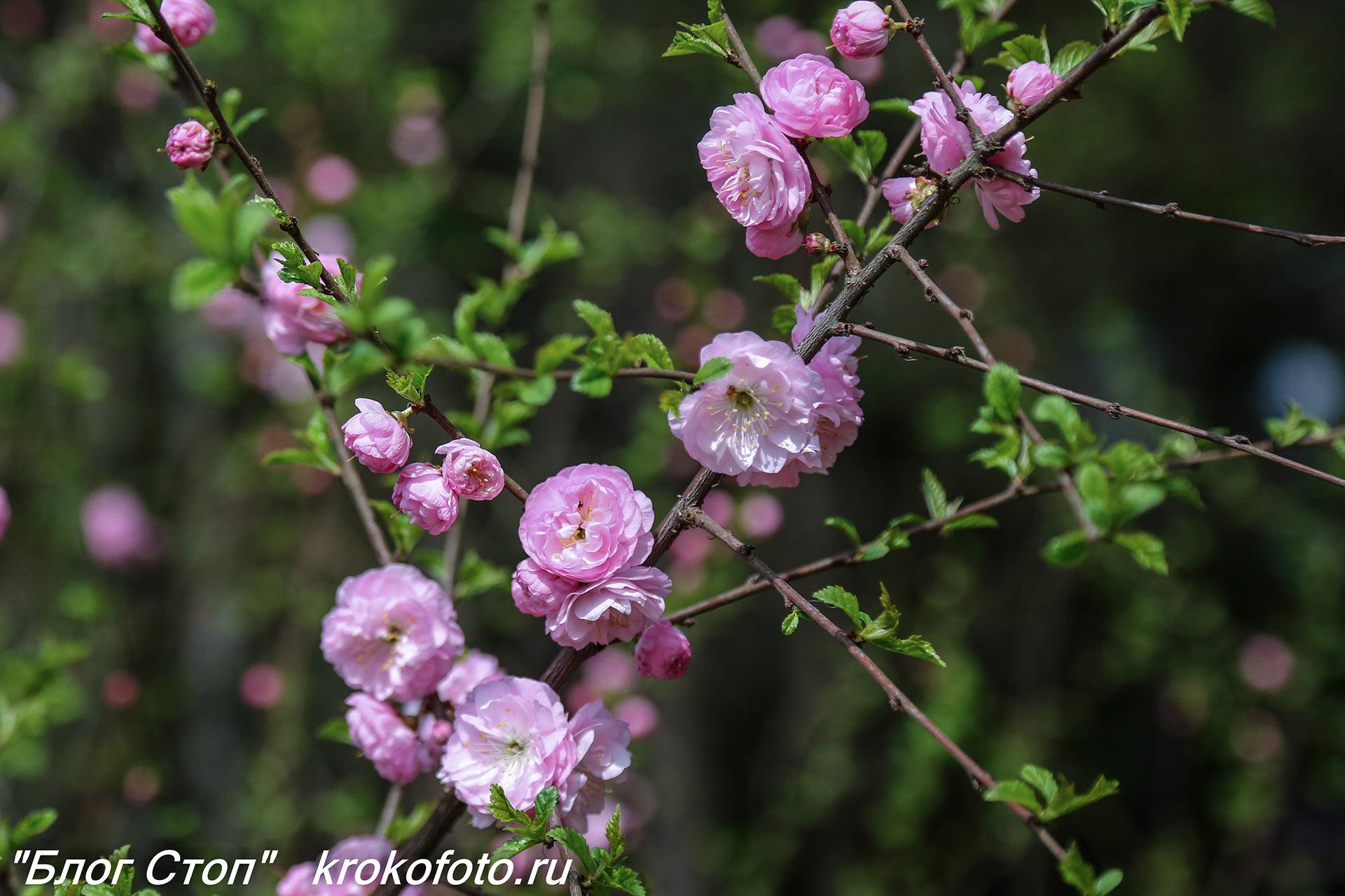 цветы 163