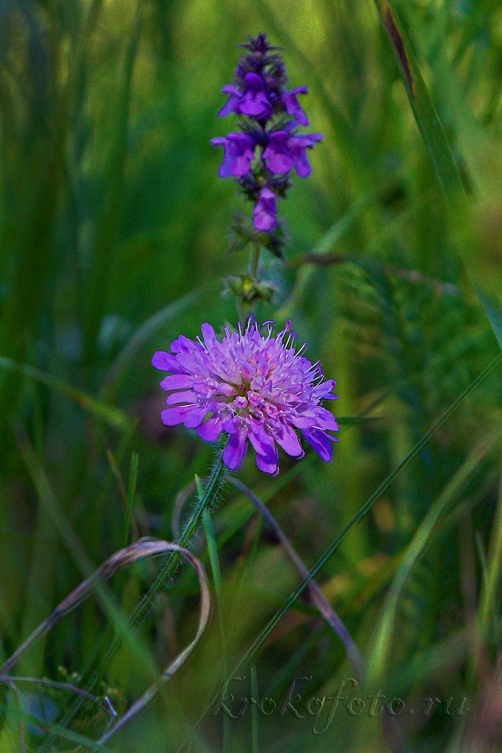 цветы 166