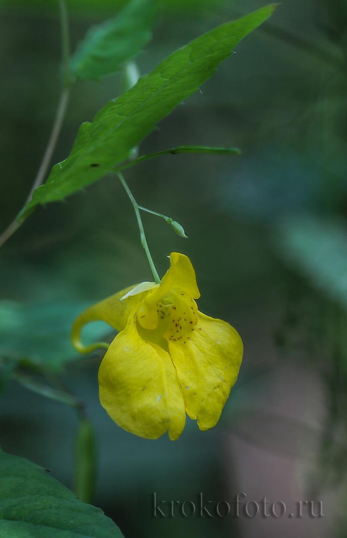 цветы 169