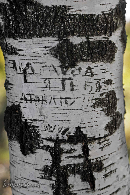 деревья 114