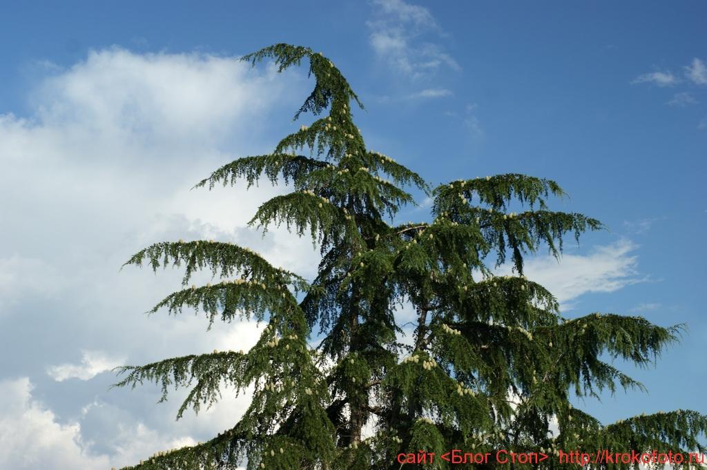 деревья 1
