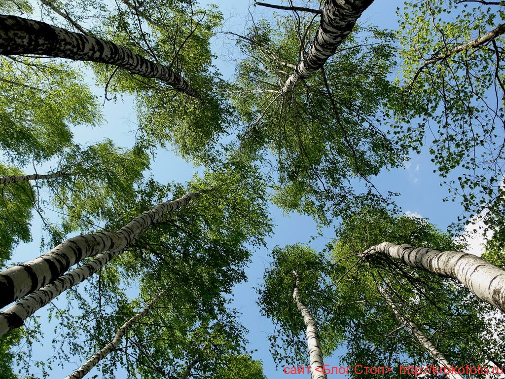 деревья 22