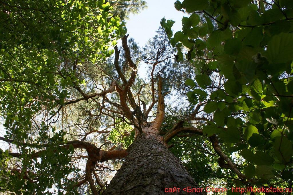 деревья 26