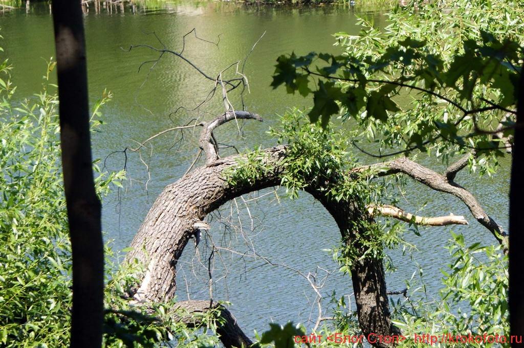 деревья 28