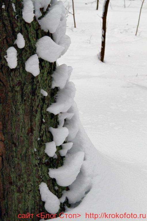 деревья 46