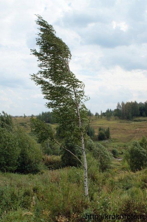 деревья 29