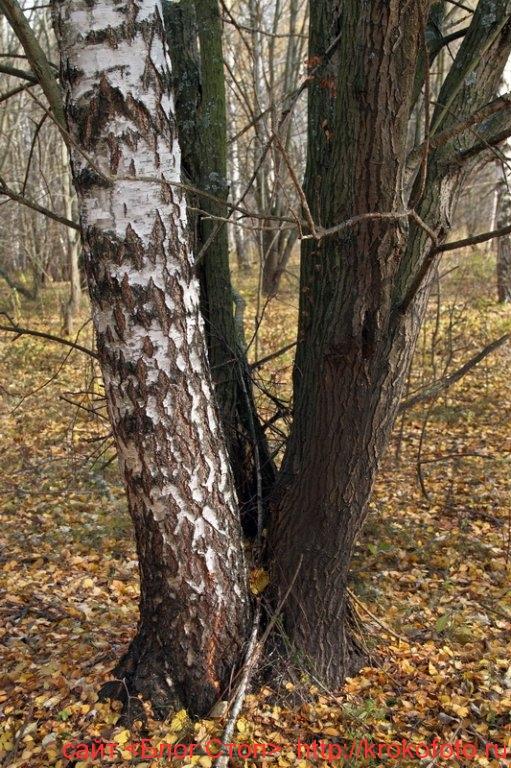 деревья 55