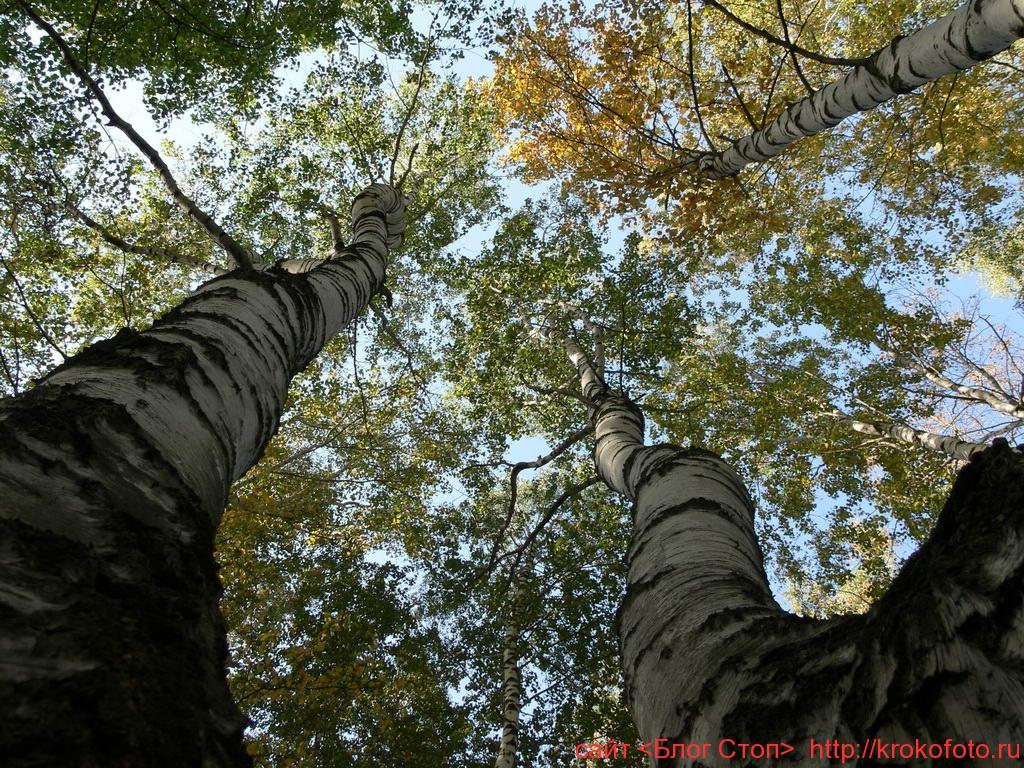 деревья 32