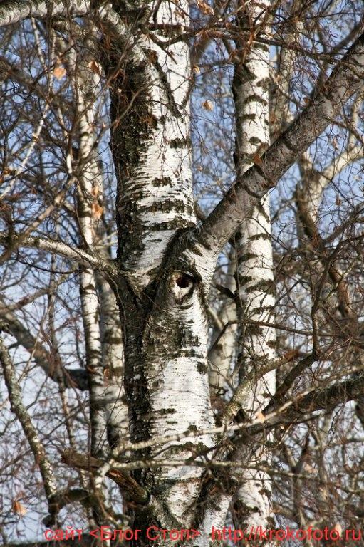 деревья 63