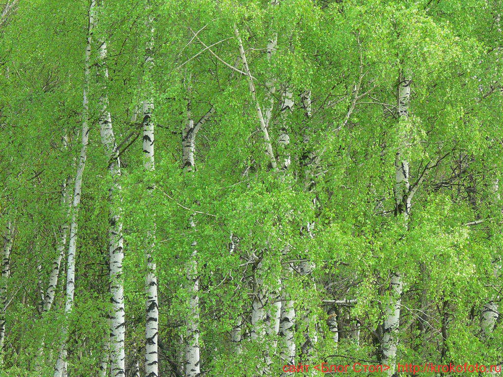 деревья 35