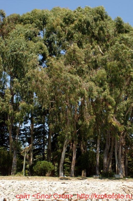 деревья 36