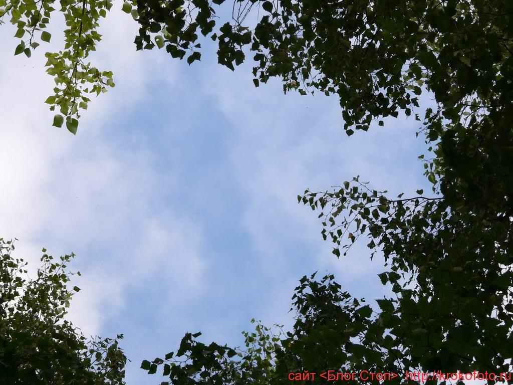 деревья 38