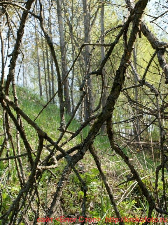 деревья 18