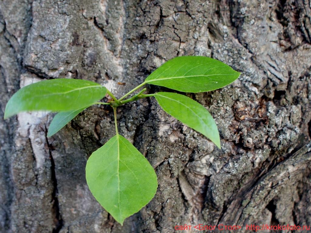 деревья 20