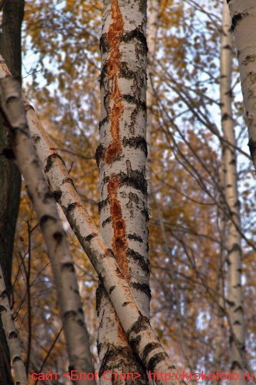 деревья 56