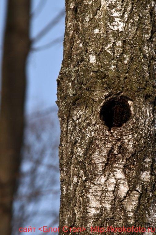 деревья 61