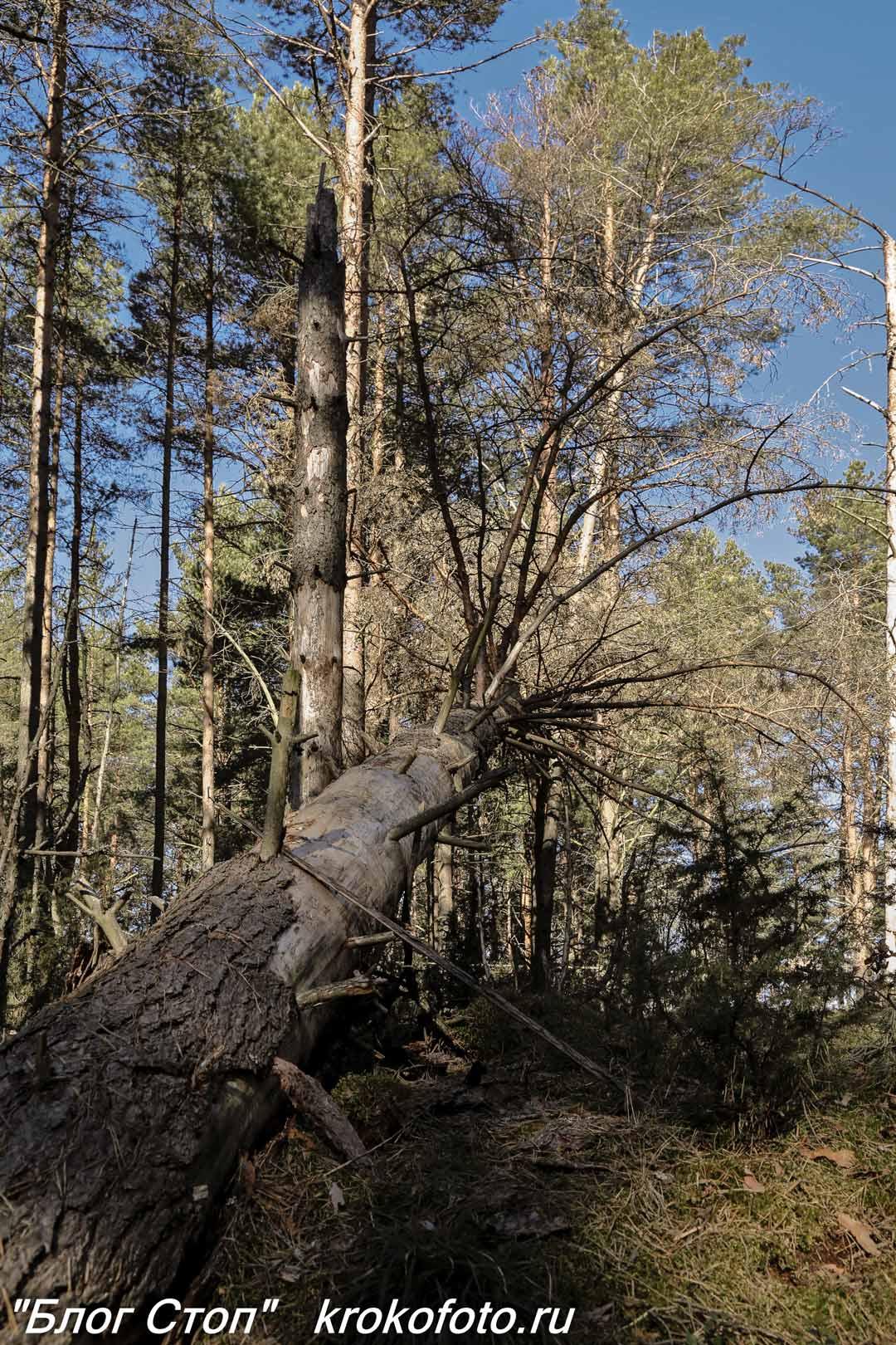 деревья 102
