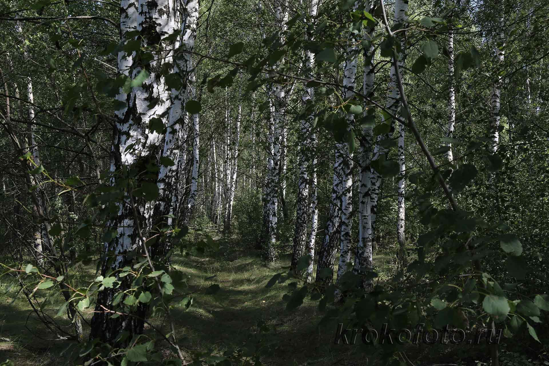 деревья 103