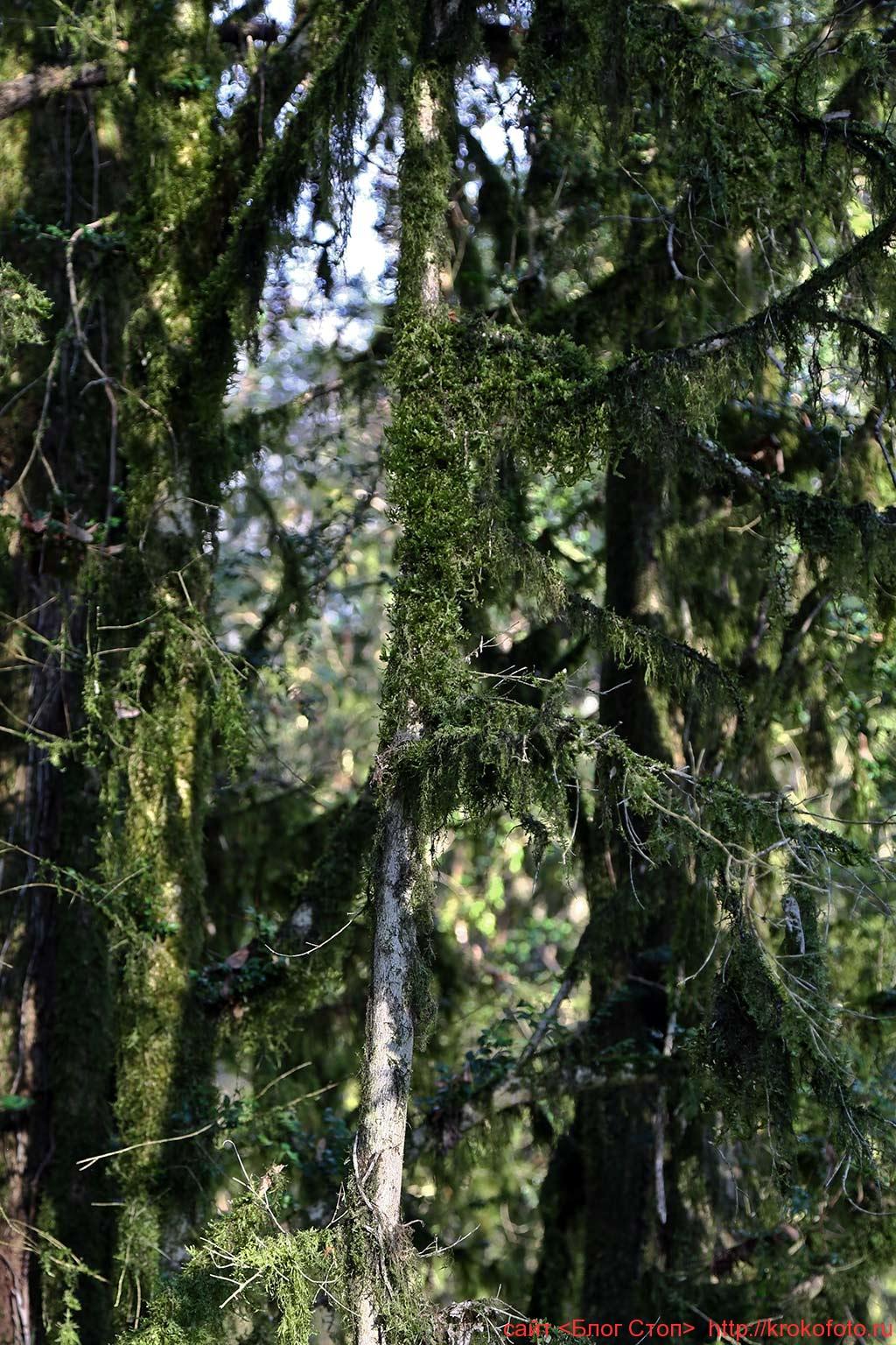 деревья 94